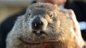 Image of a Groundhog